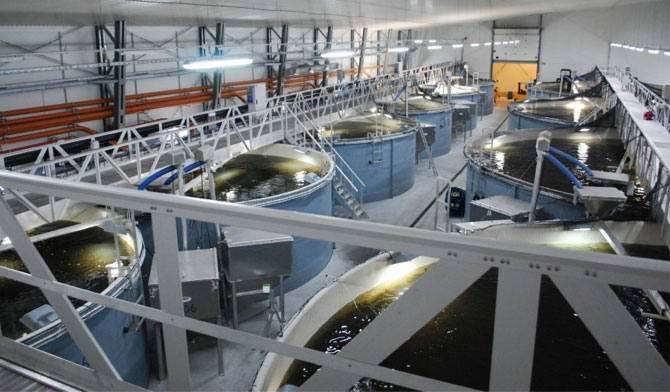 Baltic Aquaculture Innovation Center (BIC)