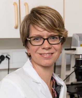 Zebrafisken hjälper läkaren välja rätt cancermedicin. bild: Anna Fahlgren