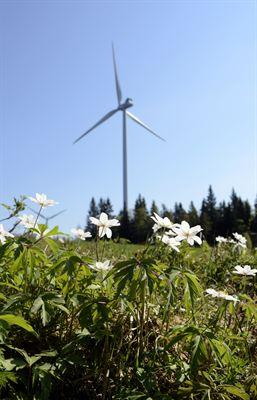 Svenska folket gillar vindkraft – men inte på sin bakgård