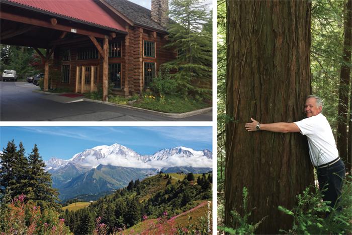 Från vulkaner till skogens giganter